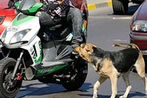 una motociclista atropelló un perro y se accidentó en la interbalnearia